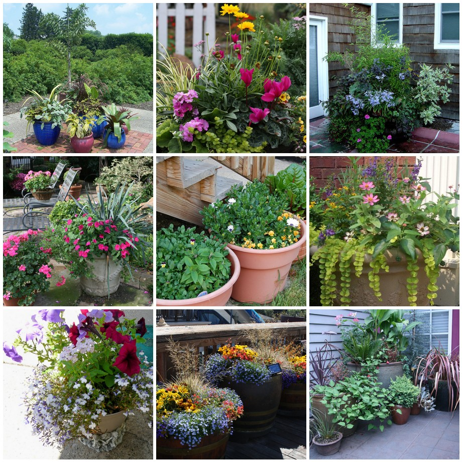 66 things you can grow at home in containers without a for Small patio plant ideas