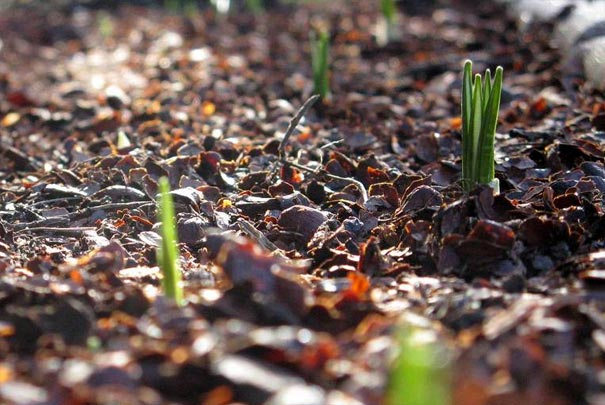 Organic mulches and compost good for your plants and for Organic compost soil