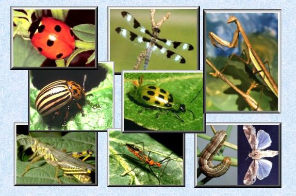 Companion Planting For Attracting Good Insects